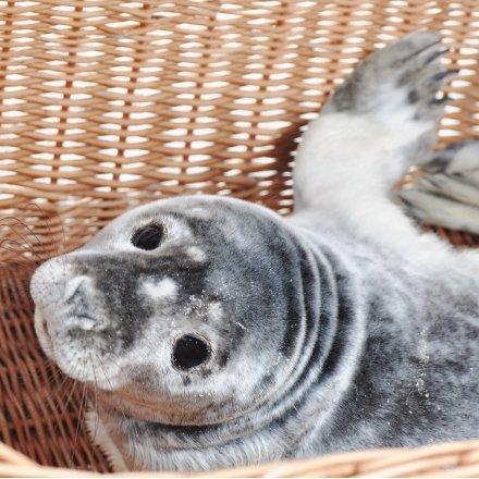 Seal centre