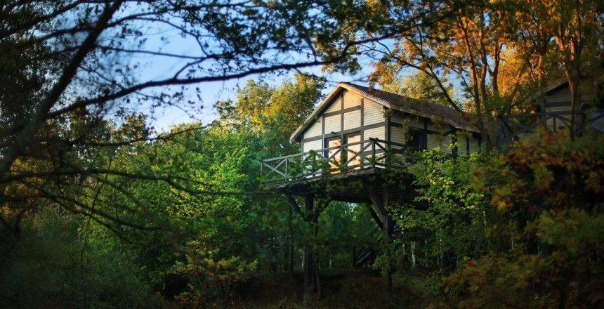 Domek na drzewie w Dolinie Charlotty