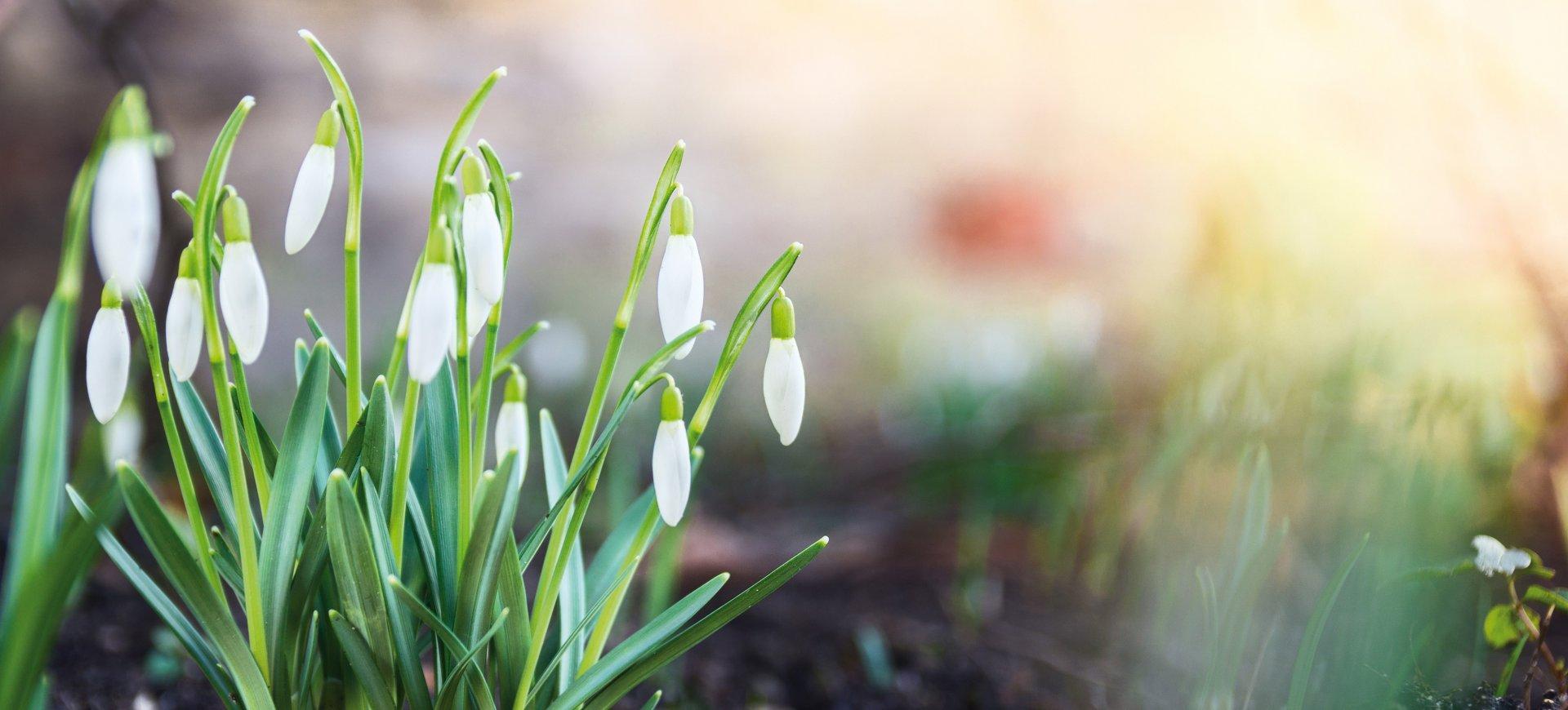 """Noc saunowa  """"Wiosenne przebudzenie"""" 14.03.2020r."""