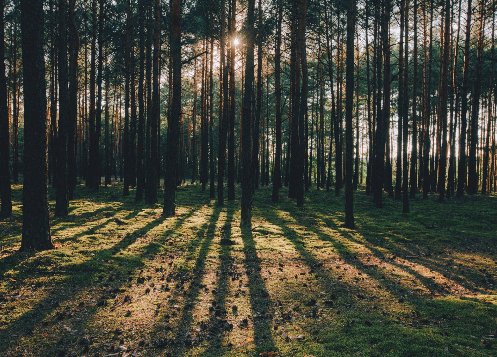 01 natura
