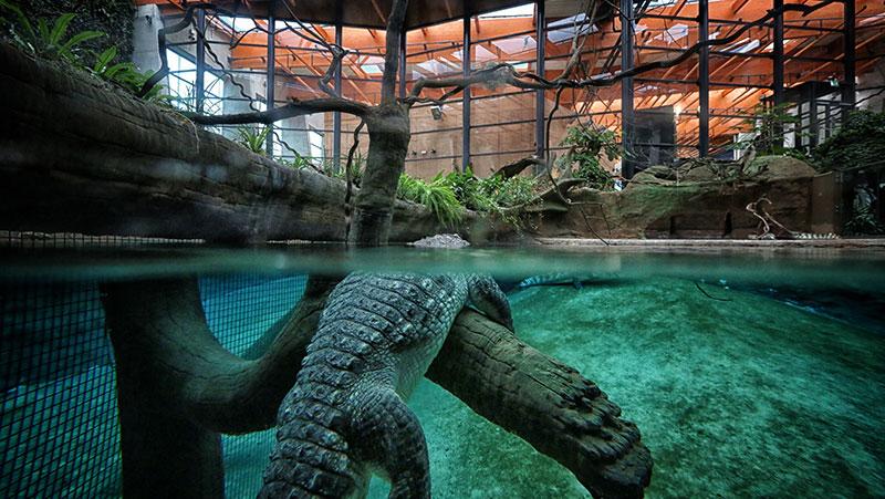 najstarszy ogród zoologiczny w Polsce