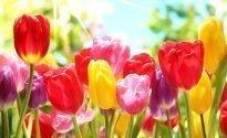 Frühling, Sommer und Herbst