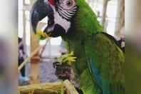 05.10.2018 - Weekend listopadaowy z papugami